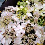 母の日のお花に
